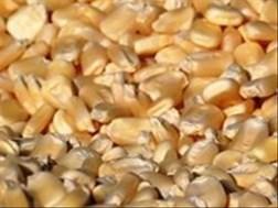 Senwes Grainlink: Hier is jou jongste Safex-pryse | News Article | News Article