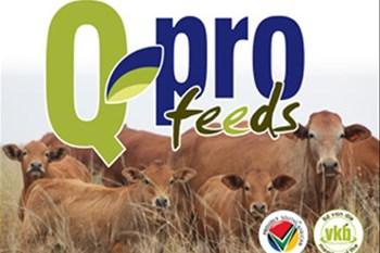 QPro Feeds - Uitvoerende Hoof, Jaco Viljoen | Blog Post