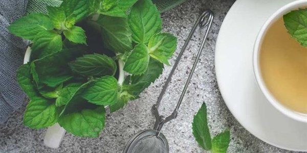 Herb of the week: Peppermint | News Article