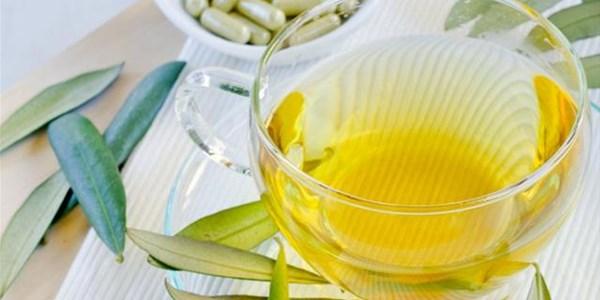 Herb of the week: Olive Leaf  | News Article