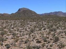 Veldbestuur belangrik ná eerste reën in Karoo | News Article
