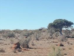 LANDBOU-PODCAST: Agri Noord-Kaap reik uit na plaaswerkers | News Article