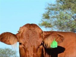 Nerpo continues its quest against the national ban on public livestock auctions | News Article