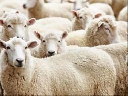 OVK-wolmarkverslag: Veselaktiwiteite opgeskort tydens #Coronavirus nasionale inperking   News Article