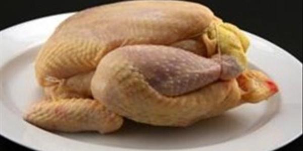 Plaaslike hoenderproduksie goed vir voedselsekerheid | News Article