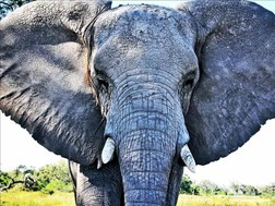 Elephant herd invades village in Musina | News Article
