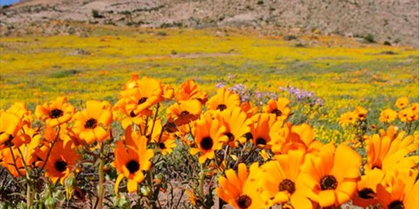Why you should visit the Northern Cape and make use of Country Hotels | News Article