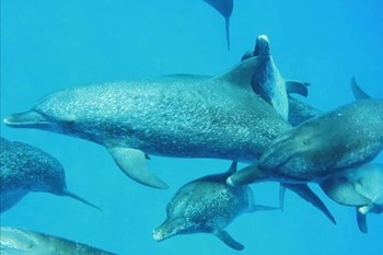Why are sharks afraid of dolphins?    Blog Post