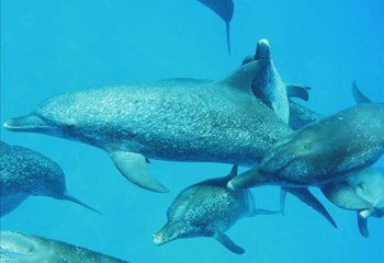 Why are sharks afraid of dolphins?  | News Article