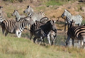 Free State tourism optimistic | News Article