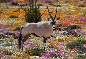 Tourism spots open in the Northern Cape | News Article