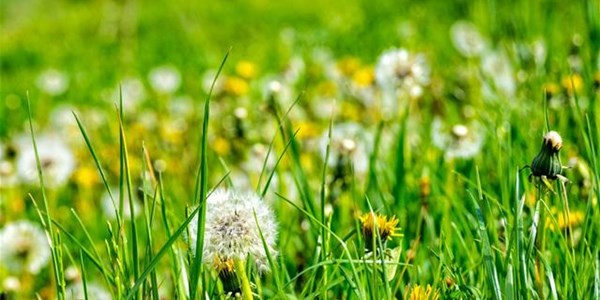 Pollen report for 8 - 14 January 2021 | News Article