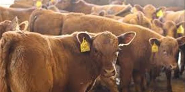 Stock theft suspects remained in custody | News Article