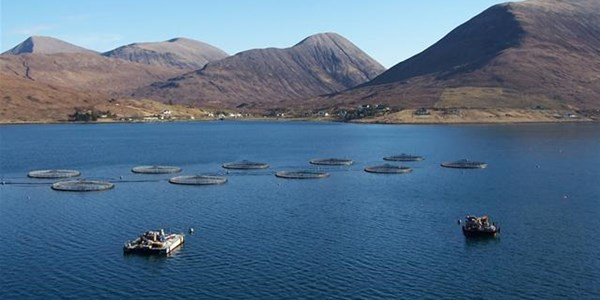 Aquaculture - the future of farming | News Article