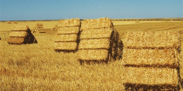 Critical data on SA agricultural sector expected this week  | News Article