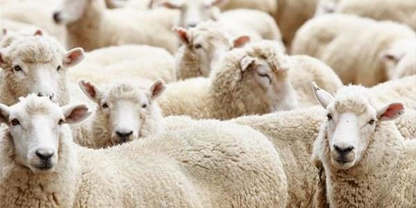 Onsekerheid heers in die wolmark | News Article
