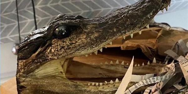 Eighty alligator heads seized in UK police raid | News Article