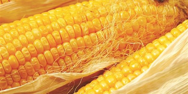 #Agbiz: SA's standing in the Global Food Security Index deteriorates | News Article