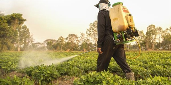 Consumers warned of buying pesticides from street hawkers  | News Article