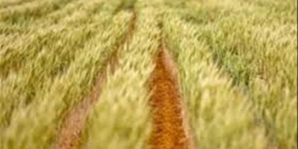 Ekonoom praat oor landboumarkvooruitsigte | News Article