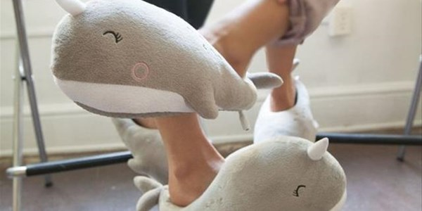 Slipper Day to help Reach For A Dream heroes | News Article