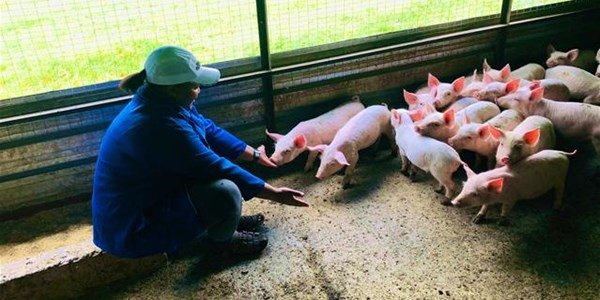 How to start a piggery - advice from a young farmer   News Article