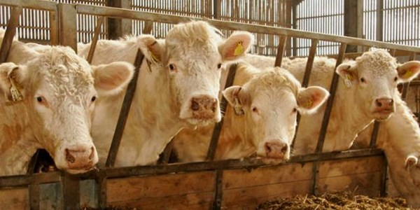 NW stock theft case postponed   News Article