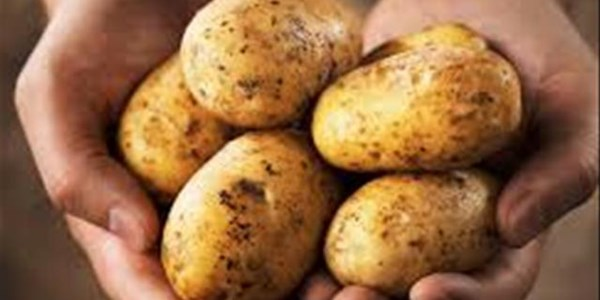 Agri News Podcast: Potato producers negatively affected by imports  | News Article