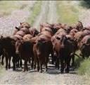 JSE-beesvleiskontrakte gaan verander  | News Article