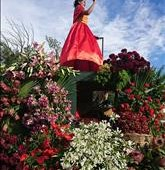 The Free State Madeira Flower Festival in Parys - 25/11/2017