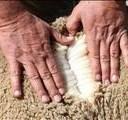 Wolkwekers se brood aan albei kante gebotter  | News Article