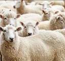 Make sure you know who is herding your livestock, police warn | News Article