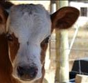 Red meat producers' congress starts in Bloemfontein tomorrow   News Article