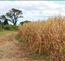 Advisory to farmers on the winter season | News Article