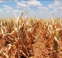 NC farmers suffer during drought | News Article