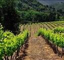 Good wine harvest despite drought | News Article