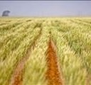R20 billion needed by DAFF for agriculture reform | News Article