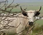 Wat sê die landbou-ekoom Kobus Laubscher? | News Article