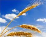 Landbou-ekonoom gesels oor voedselsekuriteit | News Article