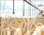 #Nampo2018: Hoe kan tegnologie waarde tot graanprodukte toevoeg? | News Article