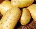 OFM-agrinuus: ASA se André Jooste gesels oor die aartappelbedryf | News Article