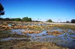 Vaal River Sewage Crisis