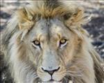 Wildbewaring 'n prioriteit in die toekoms, besluit beraad   News Article