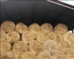 #AgriSA: Regeringsingryping broodnodig in droogtegeteisterde provinsies | News Article