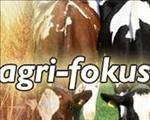 OFM-agrifokus: Bek-en-klouseer uitbraak in Limpopo, GOTG gee voerskenkings, Theo Bekker sterf   News Article
