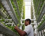 Agri News Podcast: Vertical farming tackles food security  | News Article