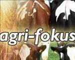 Agri Fokus-podcast: Nuus oor die Nampo Oesdag, waterskaarste en die OB | News Article