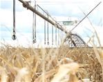 #Agbiz: How should localisation strategy be drafted for SA?   News Article