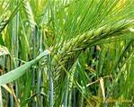 Agri-Uur: Jongste Safex-nuus   News Article