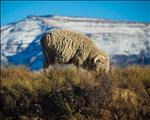 Avoid livestock stress during extreme cold conditions, warns specialist | News Article